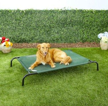 Coolaroo Steel-Framed Elevated Dog Bed