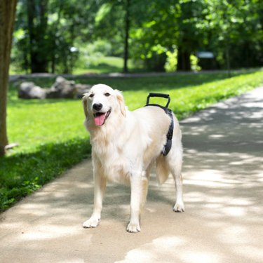 PetSafe CareLift Rear Handicapped Support Dog Harness