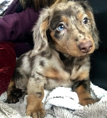 first picture of cute puppy