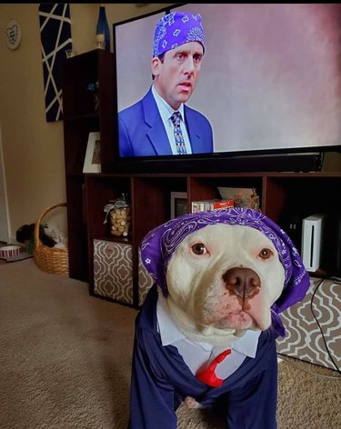 dog dressed as prison mike from the office