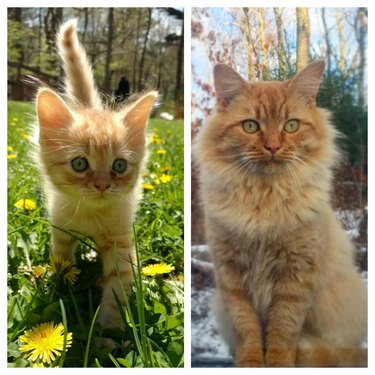 then and now pictures of orange kitten