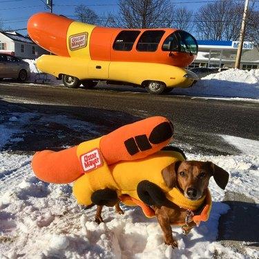 dog dressed as wienermobile