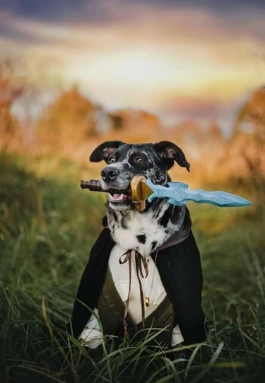 dog and woman cosplay as Lord Of The Rings characters