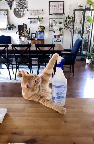cat befriends squirt bottle