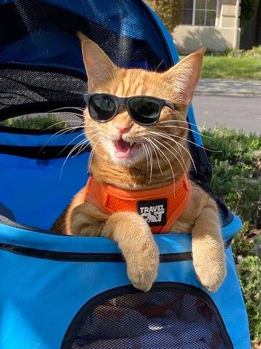 orange cat rocks sunglasses in stroller