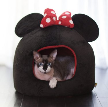 Best Friends by Sheri Disney Minnie Mouse Covered Cat & Dog Bed