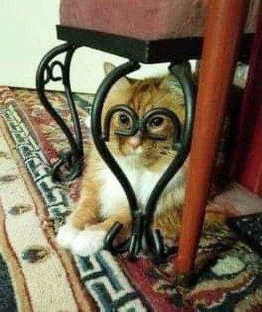 cat looks through legs of desk