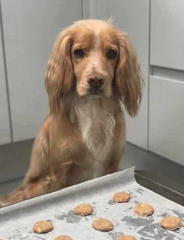 dog with cookies