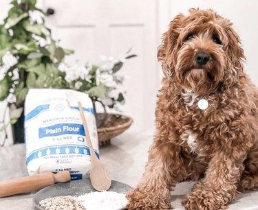 dog with flour