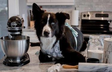 dog baking