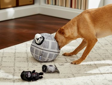 Dog playing with Star Wars Death Star chew toy