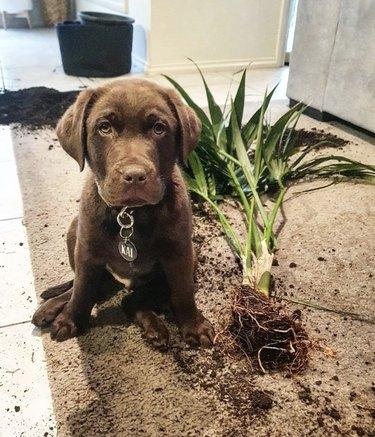 dog next to plant