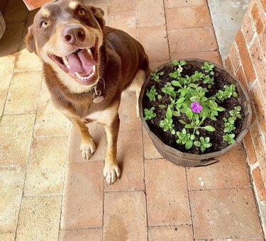 dog next to potted plant