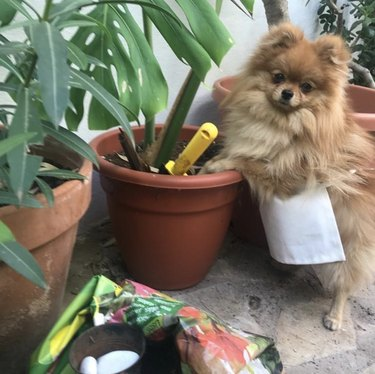 dog with potted plant