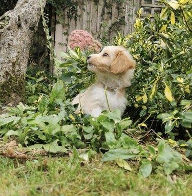 dog sniffing plants