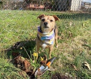 dog next to flowers