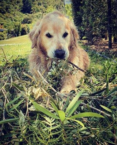 dog digging up plants