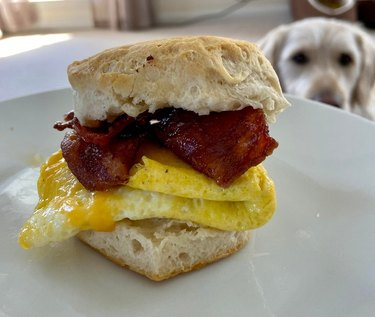 Homemade breakfast sandwich with dog in background