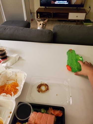 Photographer with one hand on water gun stares down cat over sushi in takeout containers