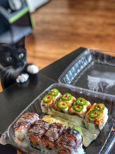 Cat looking at plastic container of sushi