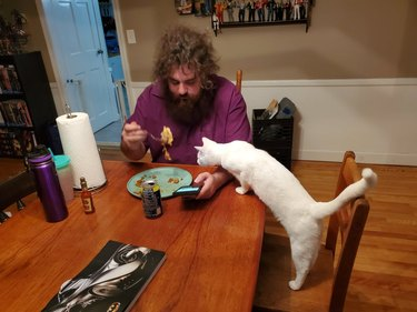 White cat standing on dining chair with paws on table to sniff plate of food