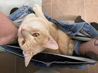 Cat sitting in jeans between feet of person sitting on toilet.