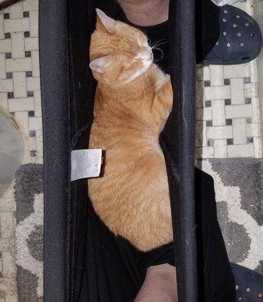 Cat sleeping in sweatpants between feet of person sitting on toilet.