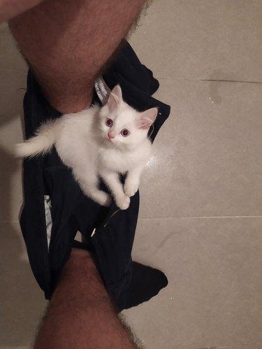 White kitten sitting on pants between feet of person sitting on toilet.