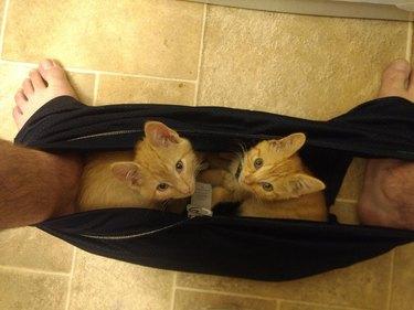 Two orange kittens sitting on black sweatpants between feet of person sitting on toilet.