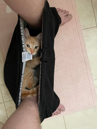 Kitten laying in underwear between feet of person sitting on toilet and biting the underwear's tag