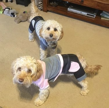 2 dogs in jeans