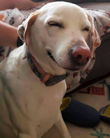 dog looks high