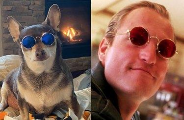 cool dog in sunglasses