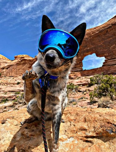 dog wears goggles on adventure hike