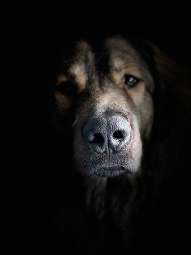 dog poses for portrait