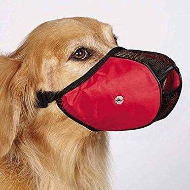 Dog wearing mesh muzzle