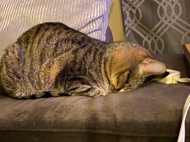 Cat sleeping facedown on couch.