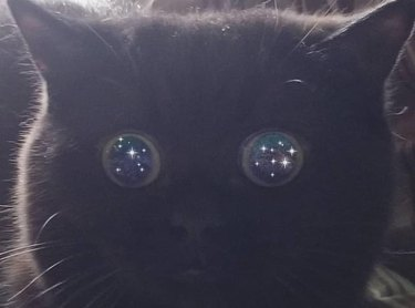 black cat with dilated pupils