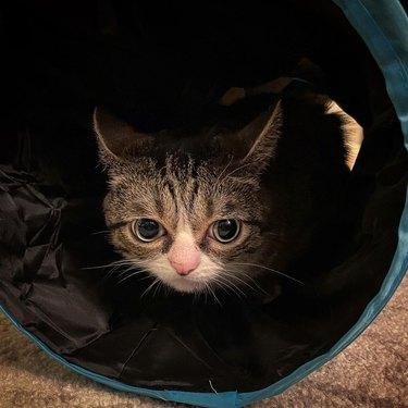 cat hiding in cat tunnel