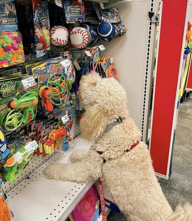 dog sniffing in treats aisle