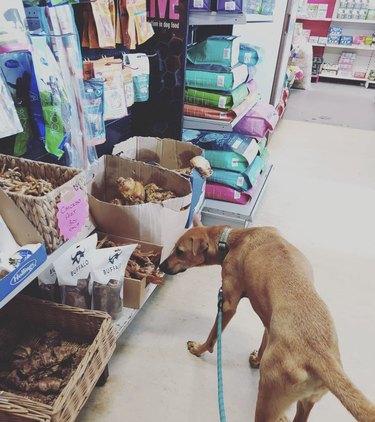 dog in treats aisle