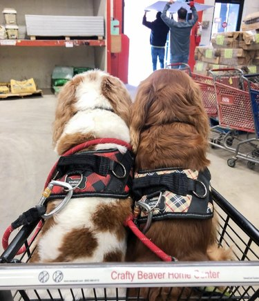 two dogs inside shopping cart