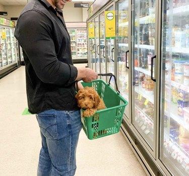 dog inside shopping basket