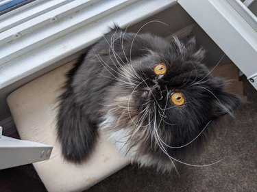 Cat with impressively long whiskers