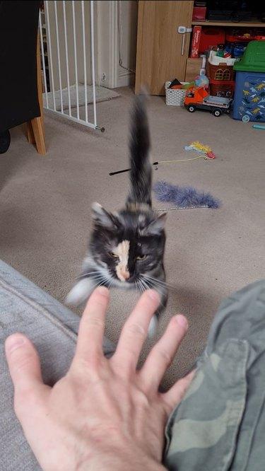 cat pounces on human hand