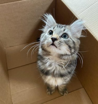Kitten with impressive whiskers