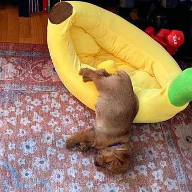 dog sleeping in banana bed