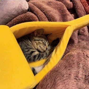 cat sleeping in banana bed