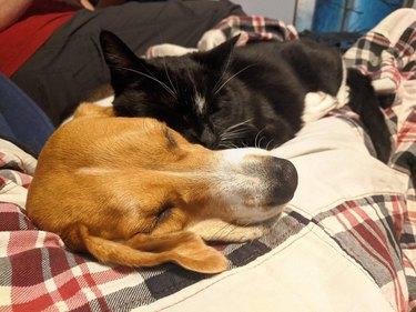 Cat and dog cuddling cheek to cheek