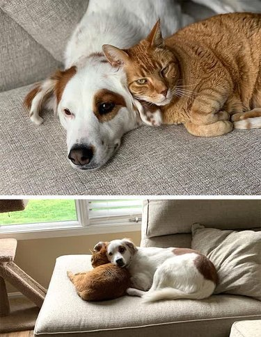 Cat and dog cuddling on couch